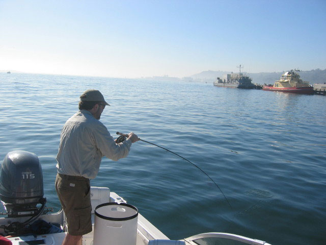 San Diego Bay Fishing with The Salty Doc